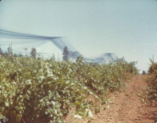 Bird Netting in 1978