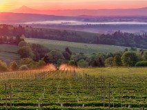 Pioneering Oregon Vineyards