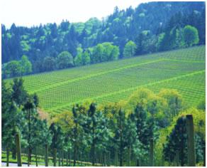 Weber Vineyards